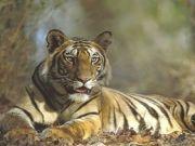 Wild Life In Ranthambore