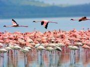 Best of Kenya Trip
