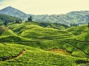 Blissful South India - 8 Nights 9 Days