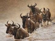 3 Days Safari to Maasai Mara
