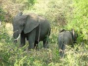 Jambo Tanzania Safari Package