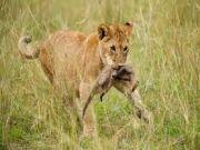 Best of Tanzania and Zanzibar Safari