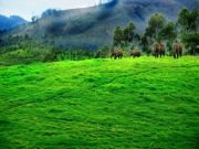 Kerala Package For 3Night/4Days