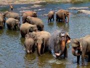 Pinnawala Elephant Orphanage & Kandy