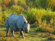 Kaziranga - Nameri - Pobitora Wildlife Sanctuary