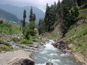 Blissful Kashmir Tulip Season