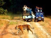 Wildlife Tour At Sariska Forest