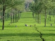 South India Package - 40 % Discount Offer