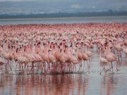 Amboseli - Maasai Mara Safari Tour
