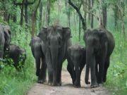 Wayanad Kerala Group Package
