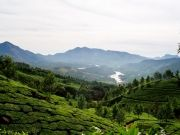 Munnar - Kumarakom - Cochin Tour