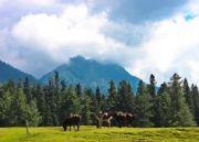 Natural Beauty Kashmir Tour