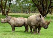Northeast Angling and Rhino Tour