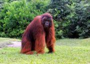 Orangutans Tour in Tanjung Puting National Park