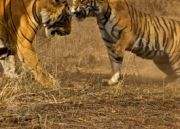 Ranthambhore Wild Life With Golden Triangle Tour