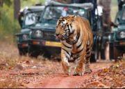 Ranthambore Tiger Reserve Trip