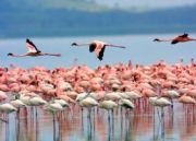 Amboseli with Lake Nakuru Tour