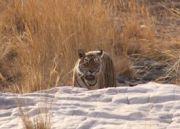 Delight Rajasthan Wildlife Tour