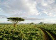 Samburu Road Safari 8Days/7 Nights