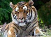 India - Nepal Wildlife Tour