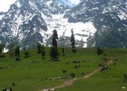 Kashmir Delights Vacations