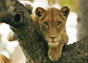 Kenya National Park