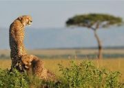 Kenya Tour for 06 Days