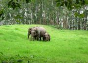 Kerala Coconut Land Tour