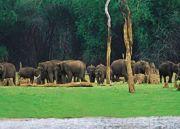 Kerala Wildlife & Backwater Tour  8 Nights 9 Days
