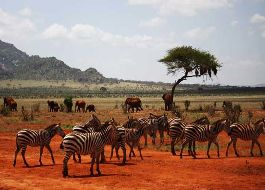 3-day Amboseli Kilimanjaro Safari (  2 Nights )