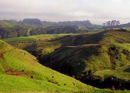 Newzealand Splendour-cox & Kings Delhi,cp-call  18001***